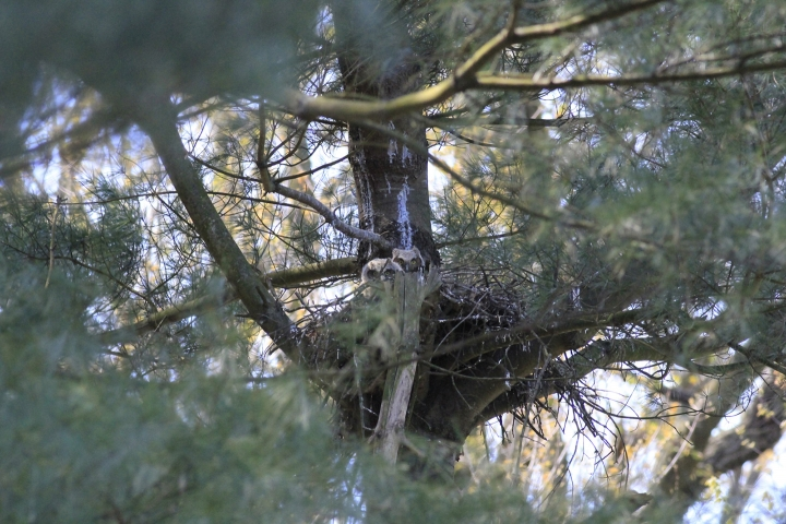 An image of two owls sitting in a tree