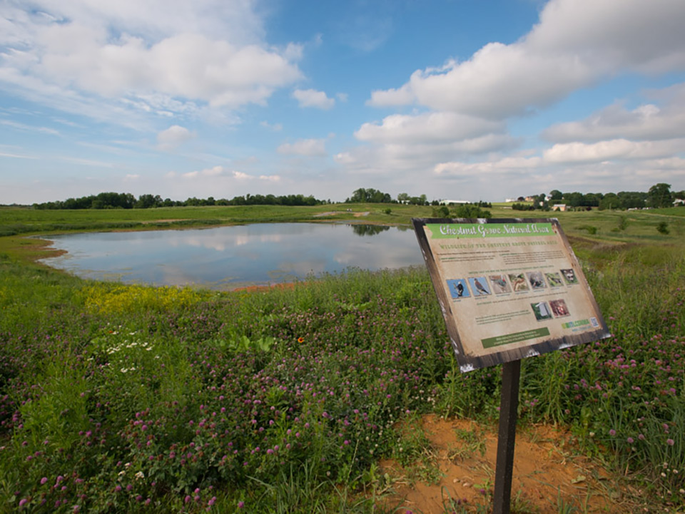 A beautiful wetland surrounded by grasslands.
